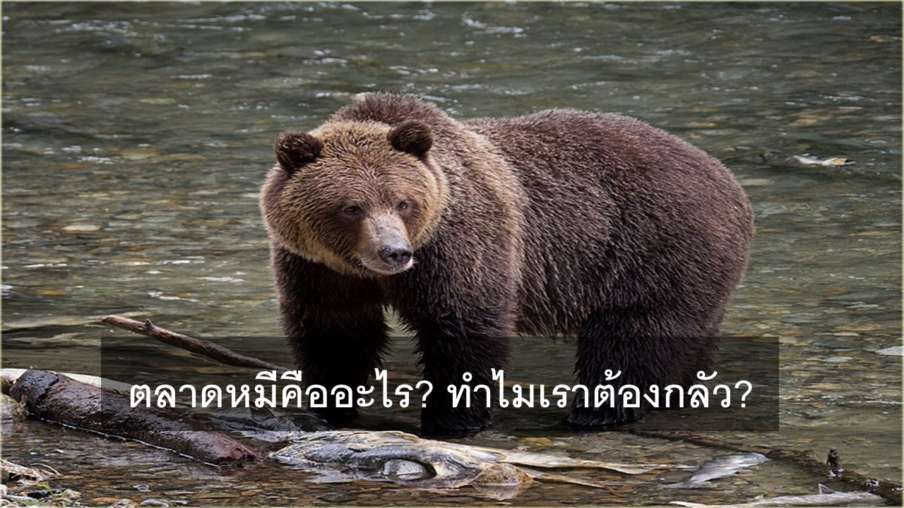 ตลาดหมี