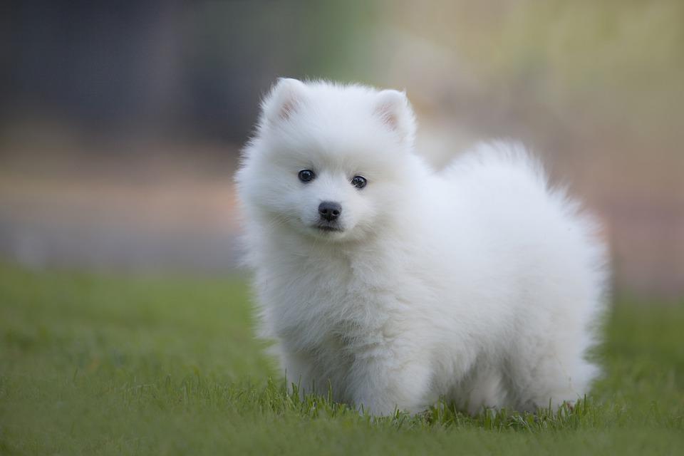 หมา-สุนัข